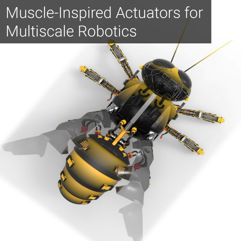 Muscle-Inspired Actuators for Multiscale Robotics